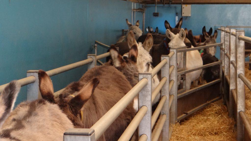 donkey weighing time